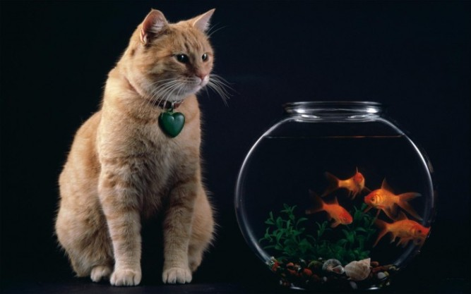 http://cdn.paper4pc.com/images/cats-fish-wallpaper-1.jpg