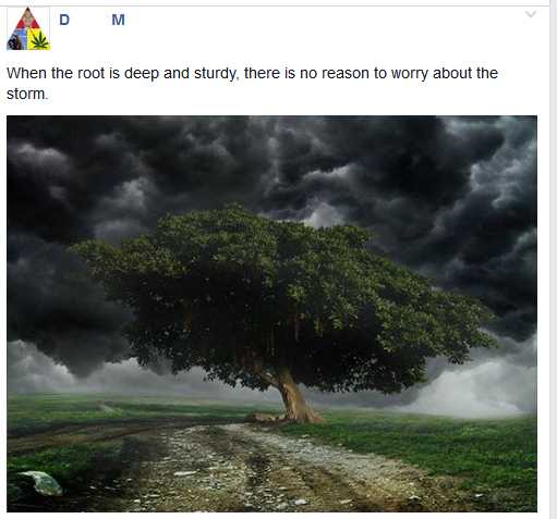 Root storm